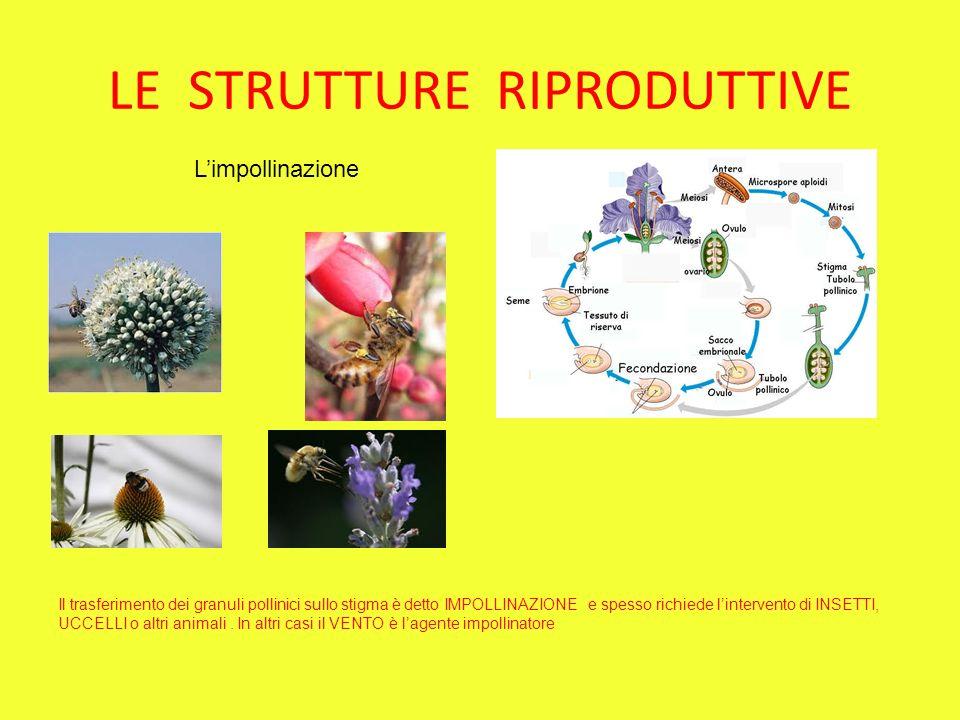 LE STRUTTURE RIPRODUTTIVE Limpollinazione Il trasferimento dei granuli pollinici sullo stigma è detto IMPOLLINAZIONE e spesso richiede lintervento di INSETTI, UCCELLI o altri animali.