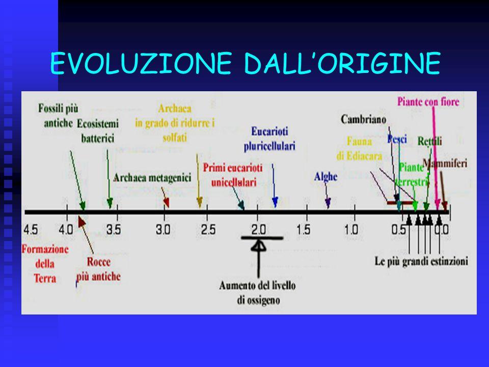 EVOLUZIONE DALLORIGINE