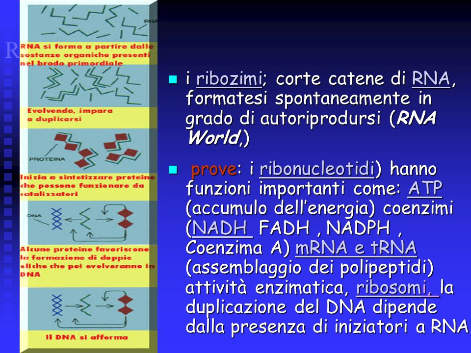 RNA WORLD i ribozimi; corte catene di RNA, formatesi spontaneamente in grado di autoriprodursi (RNA World,) i ribozimi; corte catene di RNA, formatesi