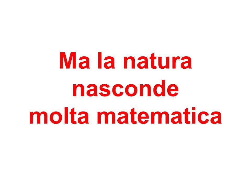 Ma la natura nasconde molta matematica