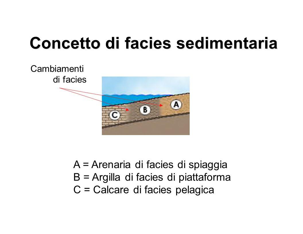 A = Arenaria di facies di spiaggia B = Argilla di facies di piattaforma C = Calcare di facies pelagica Cambiamenti di facies Concetto di facies sedime