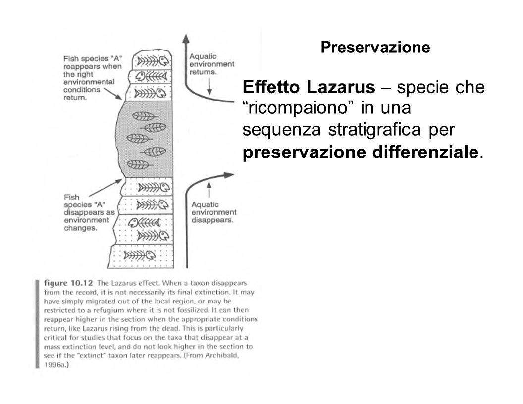Effetto Lazarus – specie che ricompaiono in una sequenza stratigrafica per preservazione differenziale. Preservazione