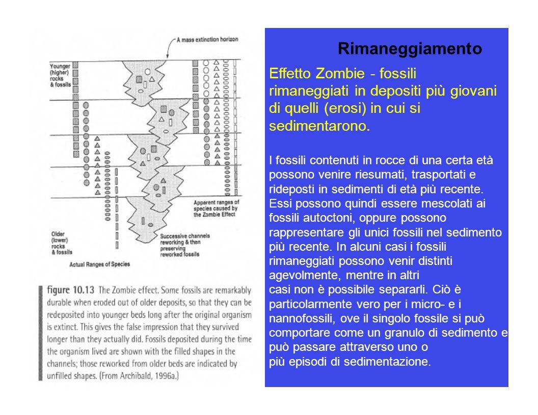 Effetto Zombie - fossili rimaneggiati in depositi più giovani di quelli (erosi) in cui si sedimentarono. I fossili contenuti in rocce di una certa età