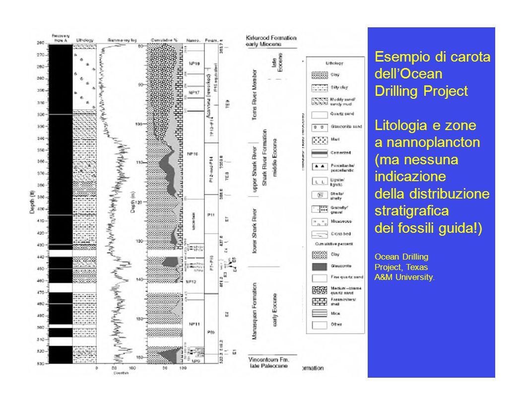 Esempio di carota dell Ocean Drilling Project Litologia e zone a nannoplancton (ma nessuna indicazione della distribuzione stratigrafica dei fossili g