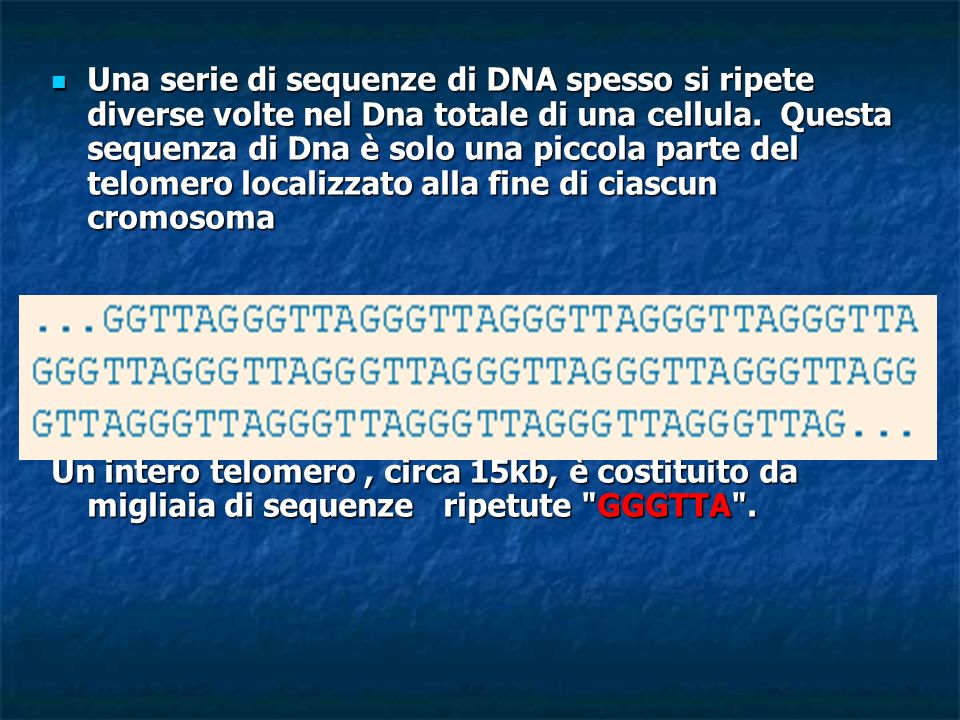 Una serie di sequenze di DNA spesso si ripete diverse volte nel Dna totale di una cellula. Questa sequenza di Dna è solo una piccola parte del telomer