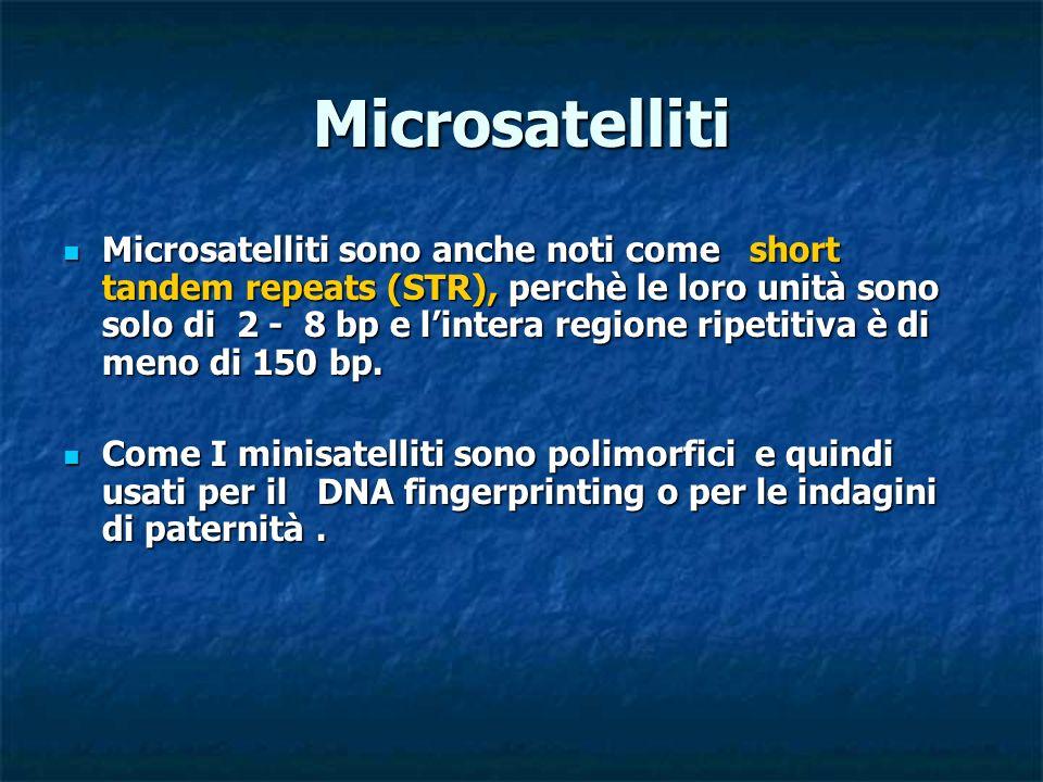 Microsatelliti Microsatelliti sono anche noti come short tandem repeats (STR), perchè le loro unità sono solo di 2 - 8 bp e lintera regione ripetitiva