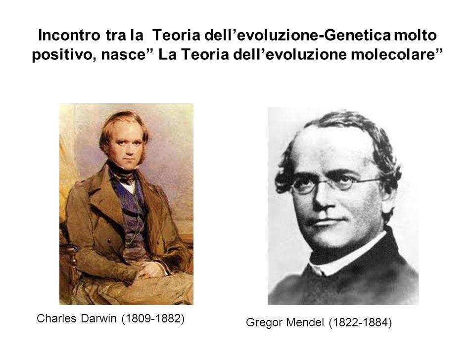 Incontro tra la Teoria dellevoluzione-Genetica molto positivo, nasce La Teoria dellevoluzione molecolare Charles Darwin (1809-1882) Gregor Mendel (182