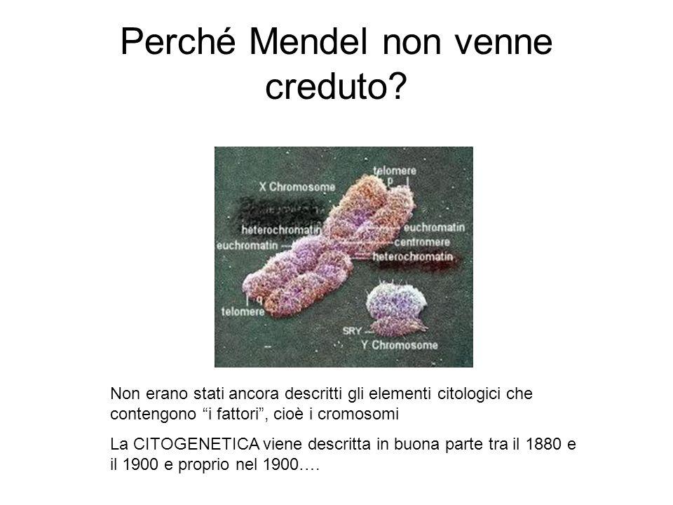 Perché Mendel non venne creduto? Non erano stati ancora descritti gli elementi citologici che contengono i fattori, cioè i cromosomi La CITOGENETICA v