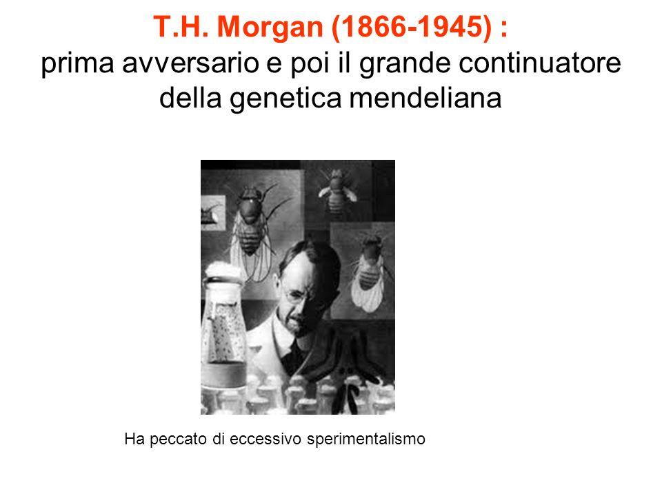 T.H. Morgan (1866-1945) : prima avversario e poi il grande continuatore della genetica mendeliana Ha peccato di eccessivo sperimentalismo