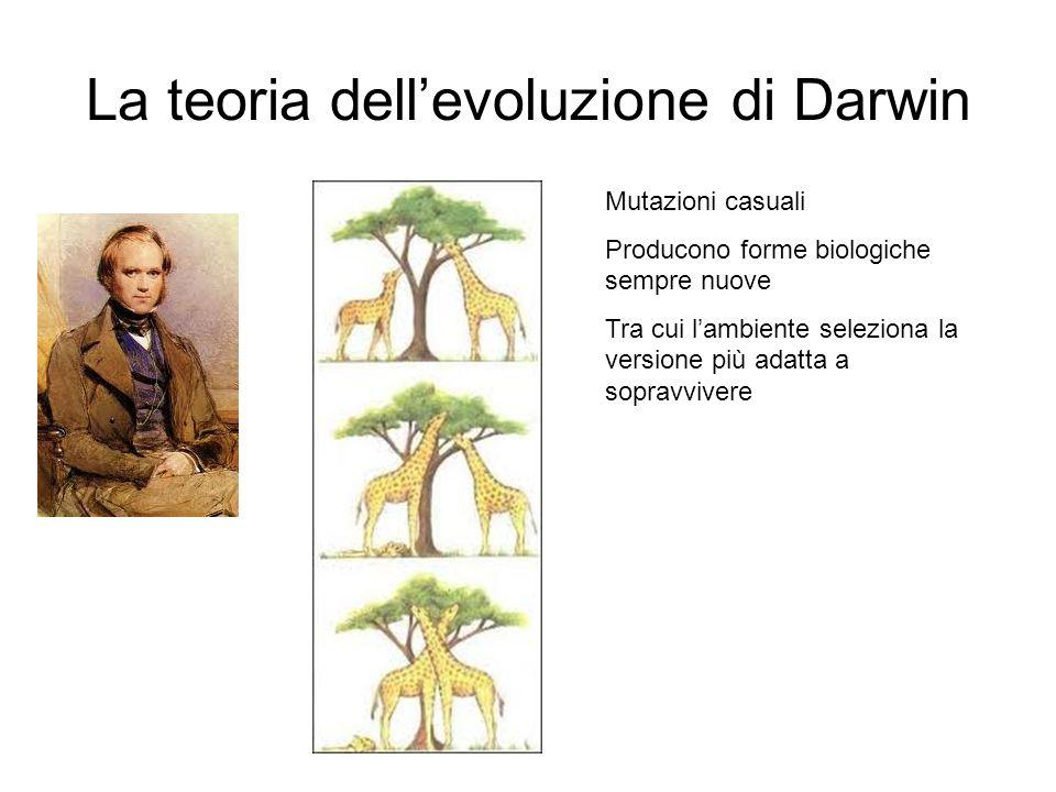 La teoria dellevoluzione di Darwin Mutazioni casuali Producono forme biologiche sempre nuove Tra cui lambiente seleziona la versione più adatta a sopr