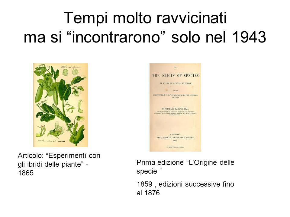 Tempi molto ravvicinati ma si incontrarono solo nel 1943 Articolo: Esperimenti con gli ibridi delle piante - 1865 Prima edizione LOrigine delle specie