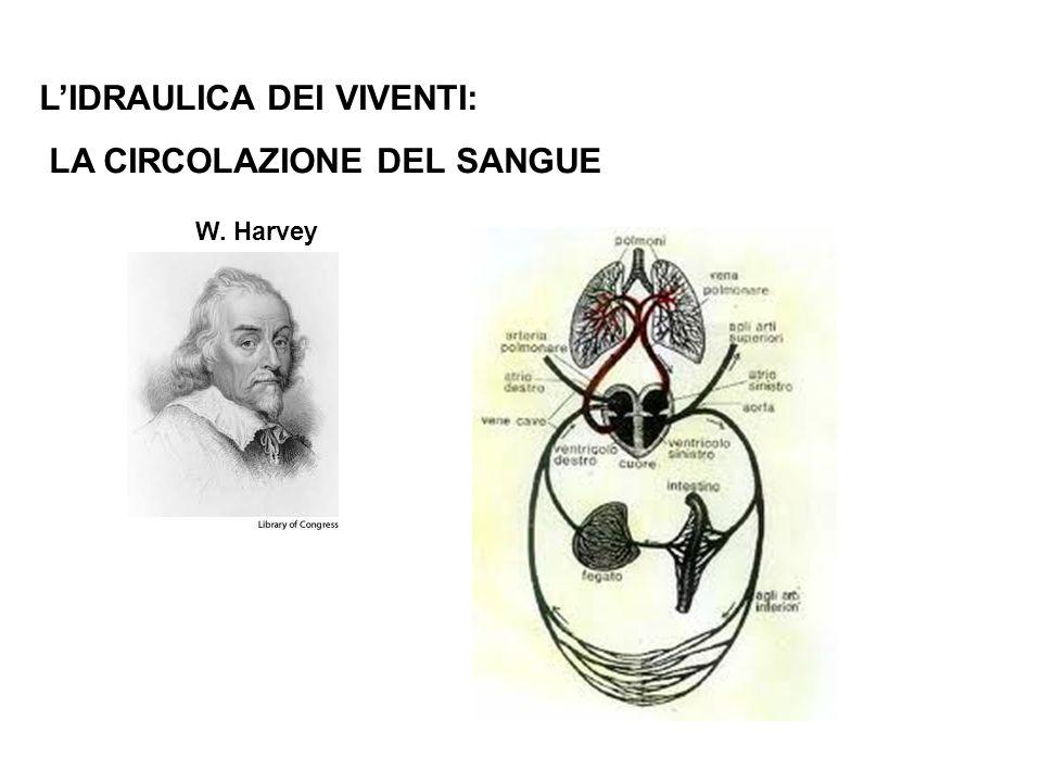 LIDRAULICA DEI VIVENTI: LA CIRCOLAZIONE DEL SANGUE W. Harvey