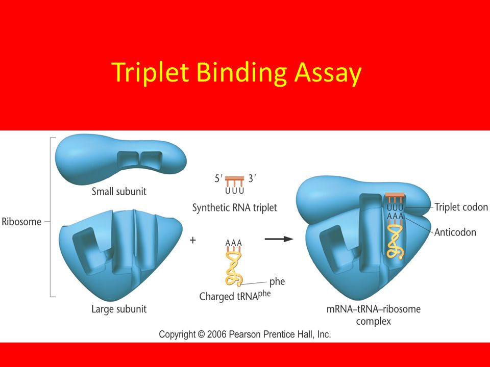 Triplet Binding Assay