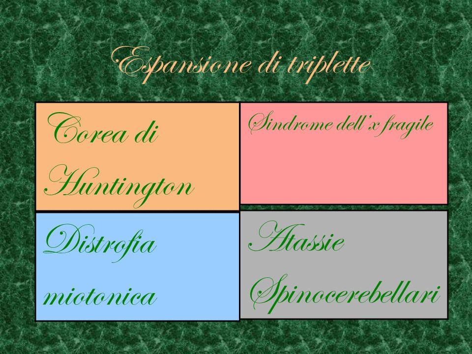 Esistono due tipi di DistrofiaMiotonica DM1 DM2