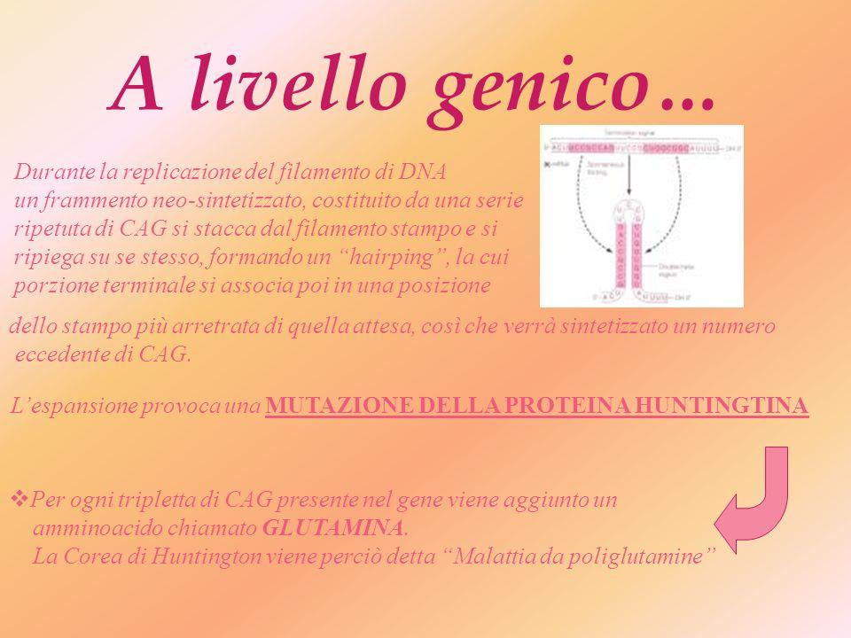 Scoperta del gene-malattia… Nel 1983 A. Boston e Jim Giusella identificano il tratto di DNA in cui è localizzato il gene responsabile della malattia.