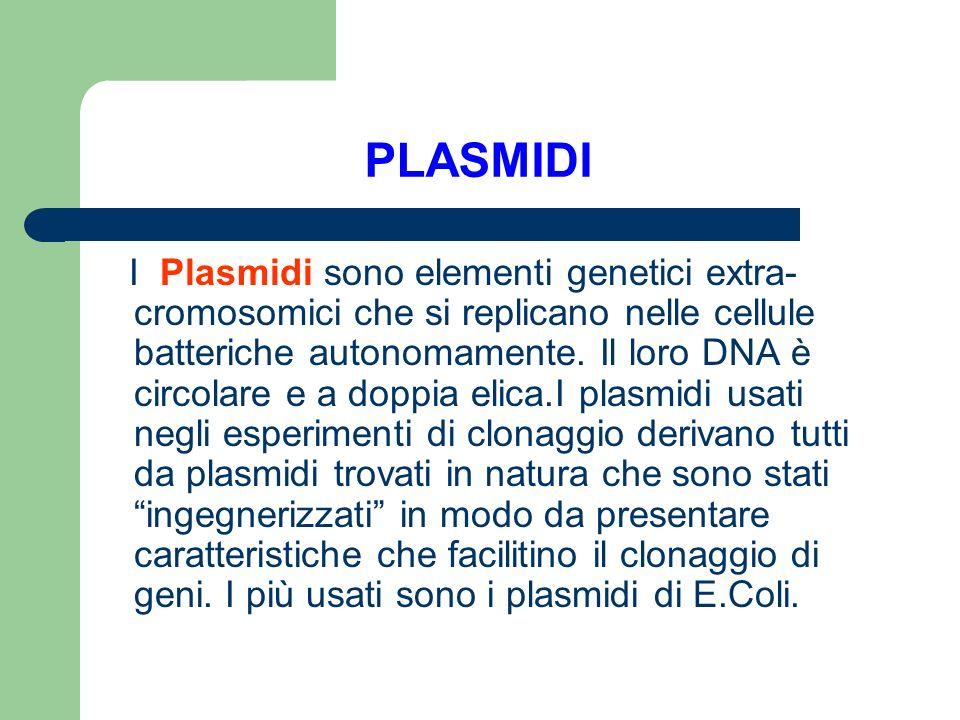 PLASMIDI I Plasmidi sono elementi genetici extra- cromosomici che si replicano nelle cellule batteriche autonomamente. Il loro DNA è circolare e a dop