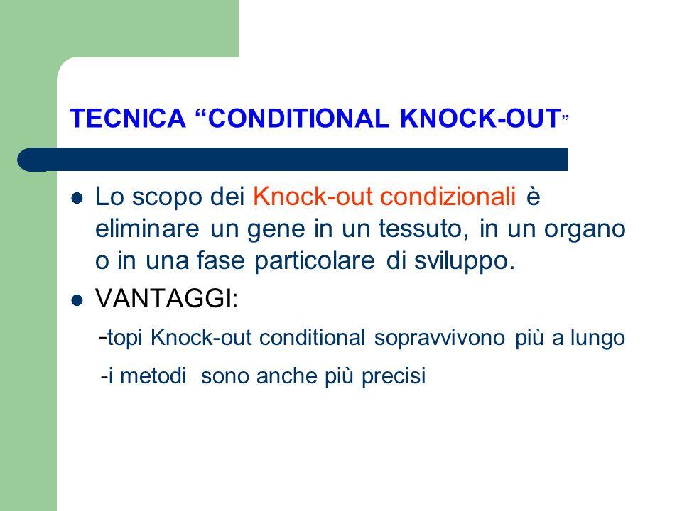 TECNICA CONDITIONAL KNOCK-OUT Lo scopo dei Knock-out condizionali è eliminare un gene in un tessuto, in un organo o in una fase particolare di svilupp