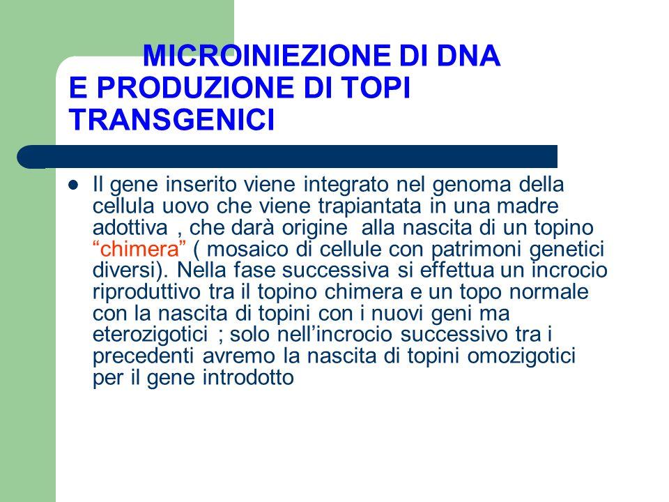 MICROINIEZIONE DI DNA E PRODUZIONE DI TOPI TRANSGENICI Il gene inserito viene integrato nel genoma della cellula uovo che viene trapiantata in una mad