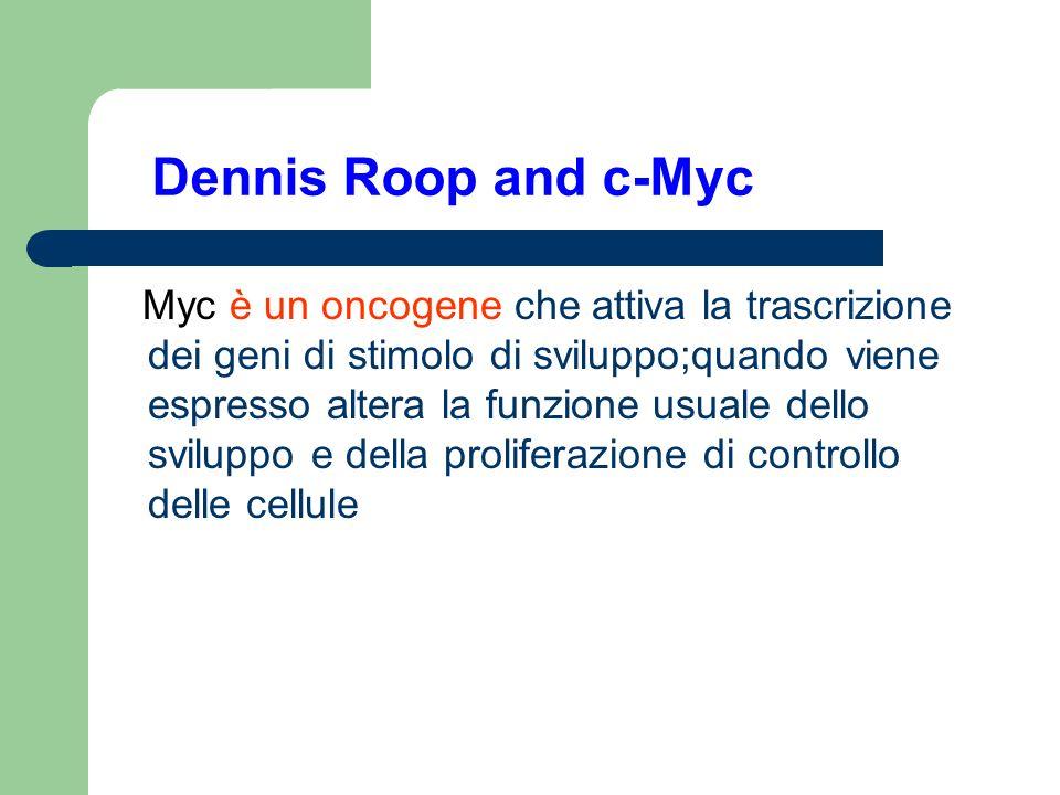Dennis Roop and c-Myc Myc è un oncogene che attiva la trascrizione dei geni di stimolo di sviluppo;quando viene espresso altera la funzione usuale del