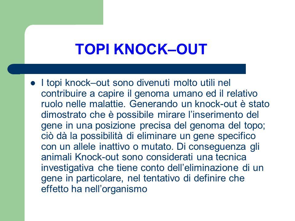 TOPI KNOCK–OUT I topi knock–out sono divenuti molto utili nel contribuire a capire il genoma umano ed il relativo ruolo nelle malattie. Generando un k