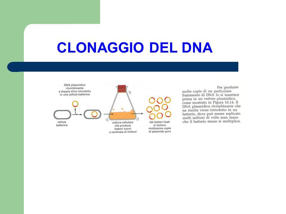 PLASMIDI I Plasmidi sono elementi genetici extra- cromosomici che si replicano nelle cellule batteriche autonomamente.