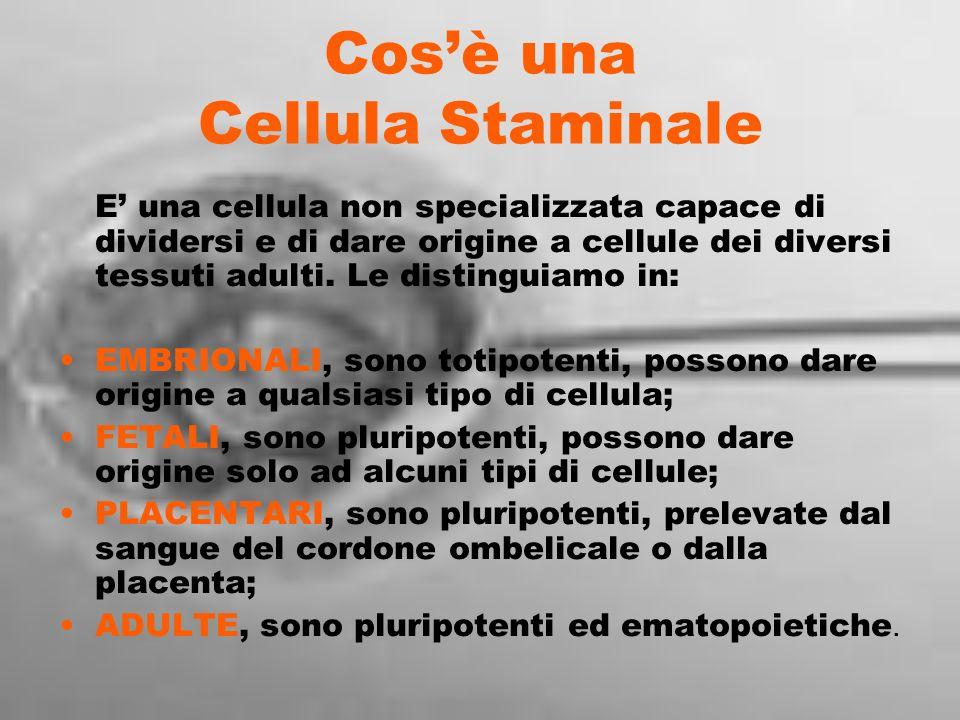 Cosè una Cellula Staminale E una cellula non specializzata capace di dividersi e di dare origine a cellule dei diversi tessuti adulti. Le distinguiamo