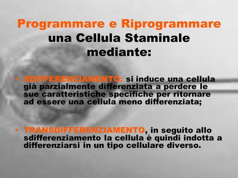 Programmare e Riprogrammare una Cellula Staminale mediante: SDIFFERENZIAMENTO: si induce una cellula già parzialmente differenziata a perdere le sue c