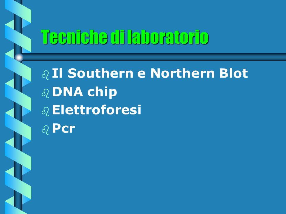 Tecniche di laboratorio b b Il Southern e Northern Blot b b DNA chip b b Elettroforesi b b Pcr