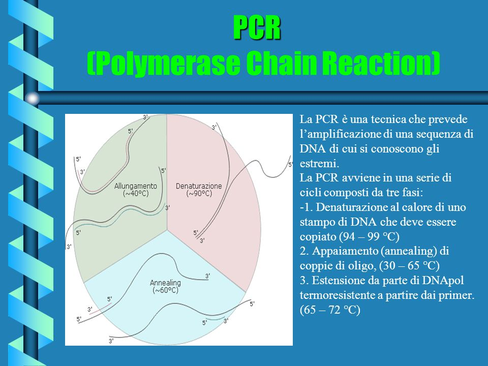 PCR PCR (Polymerase Chain Reaction) La PCR è una tecnica che prevede lamplificazione di una sequenza di DNA di cui si conoscono gli estremi. La PCR av