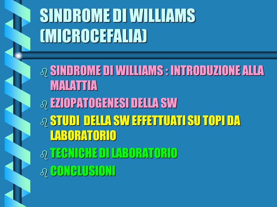 SINDROME DI WILLIAMS (MICROCEFALIA) b SINDROME DI WILLIAMS : INTRODUZIONE ALLA MALATTIA b EZIOPATOGENESI DELLA SW b STUDI DELLA SW EFFETTUATI SU TOPI