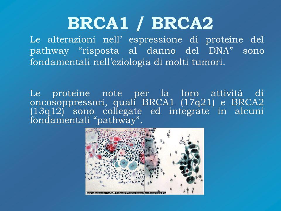 BRCA1 / BRCA2 Le alterazioni nell espressione di proteine del pathway risposta al danno del DNA sono fondamentali nelleziologia di molti tumori. Le pr