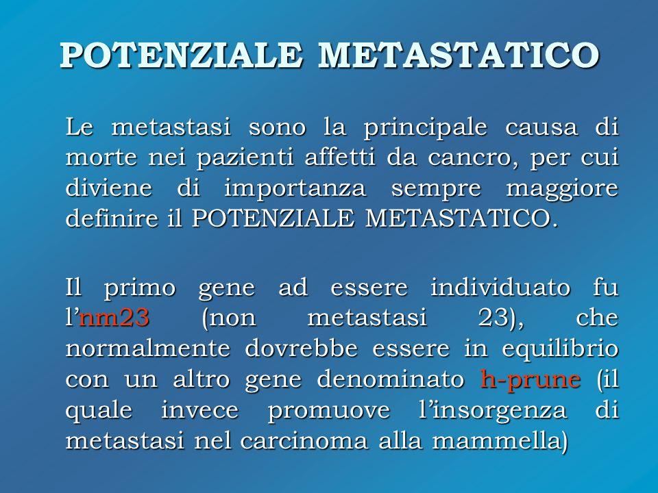 POTENZIALE METASTATICO Le metastasi sono la principale causa di morte nei pazienti affetti da cancro, per cui diviene di importanza sempre maggiore de