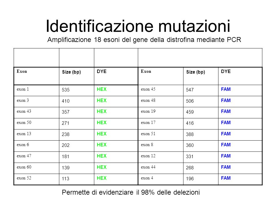 Identificazione mutazioni Exon Size (bp) DYE Exon Size (bp) DYE exon 1 535 HEX exon 45 547 FAM exon 3 410 HEX exon 48 506 FAM exon 43 357 HEX exon 19