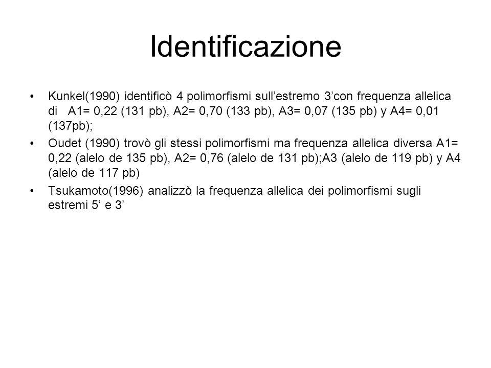 Identificazione Kunkel(1990) identificò 4 polimorfismi sullestremo 3con frequenza allelica di A1= 0,22 (131 pb), A2= 0,70 (133 pb), A3= 0,07 (135 pb)