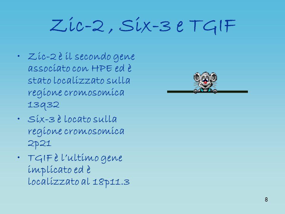 8 Zic-2, Six-3 e TGIF Zic-2 è il secondo gene associato con HPE ed è stato localizzato sulla regione cromosomica 13q32 Six-3 è locato sulla regione cr