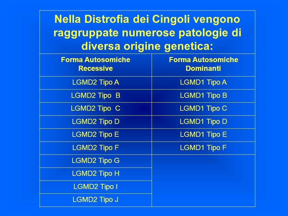 Nella Distrofia dei Cingoli vengono raggruppate numerose patologie di diversa origine genetica: Forma Autosomiche Recessive Forma Autosomiche Dominant