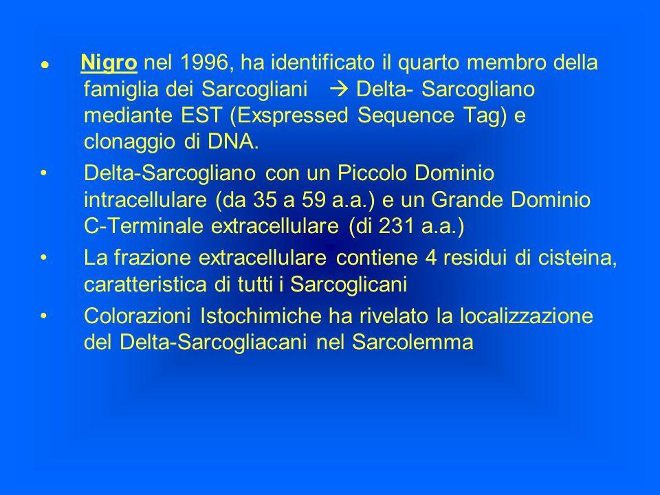 Nigro nel 1996, ha identificato il quarto membro della famiglia dei Sarcogliani Delta- Sarcogliano mediante EST (Exspressed Sequence Tag) e clonaggio