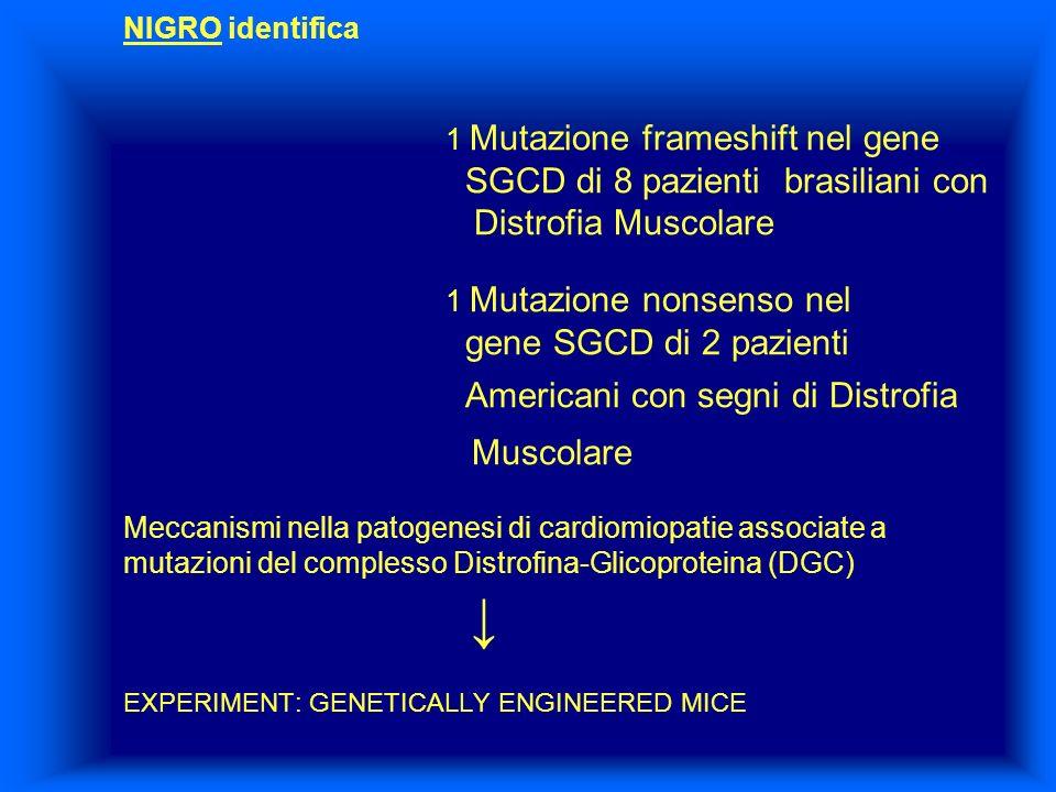 NIGRO identifica 1 Mutazione frameshift nel gene SGCD di 8 pazienti brasiliani con Distrofia Muscolare 1 Mutazione nonsenso nel gene SGCD di 2 pazient