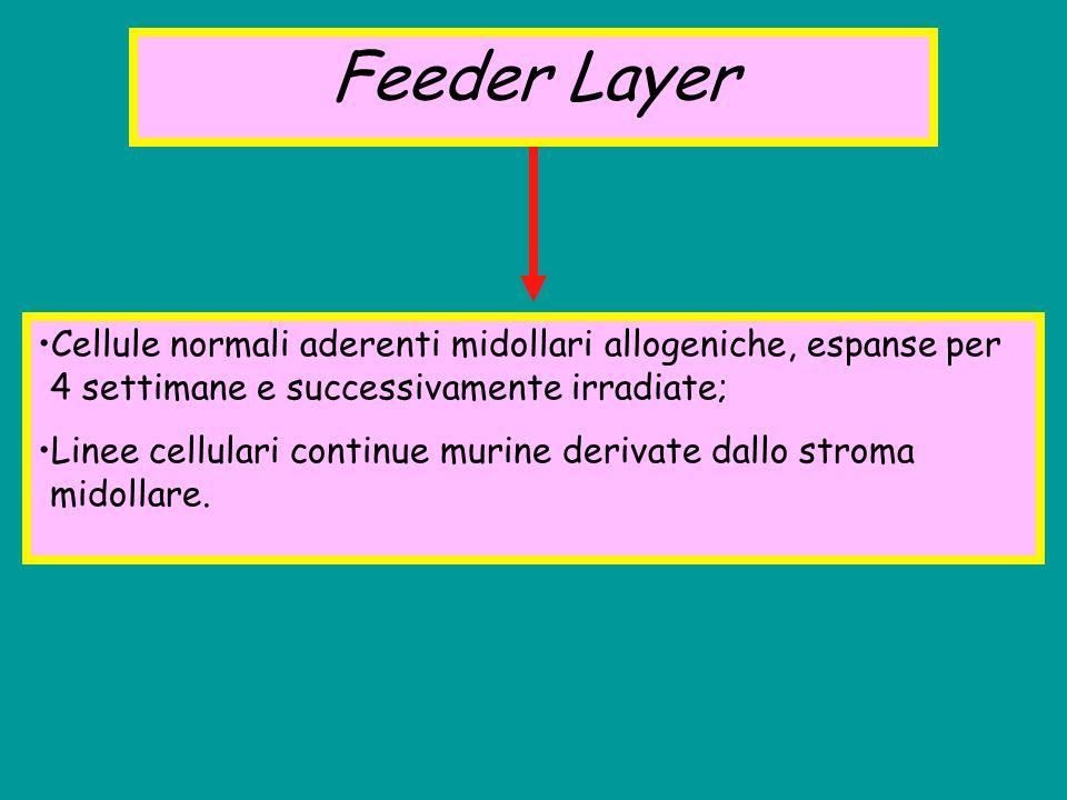 Feeder Layer Cellule normali aderenti midollari allogeniche, espanse per 4 settimane e successivamente irradiate; Linee cellulari continue murine deri