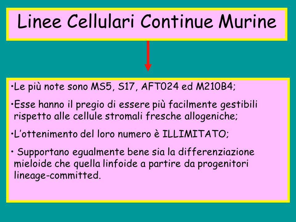 Linee Cellulari Continue Murine Le più note sono MS5, S17, AFT024 ed M210B4; Esse hanno il pregio di essere più facilmente gestibili rispetto alle cel