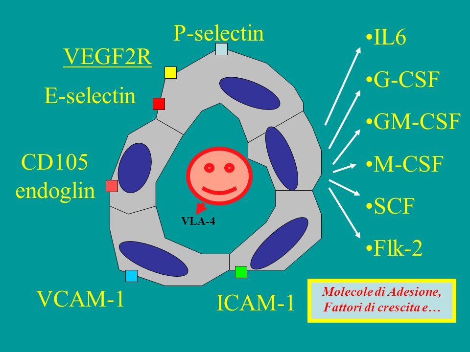 IL6 G-CSF GM-CSF M-CSF SCF Flk-2 VCAM-1 ICAM-1 E-selectin P-selectin CD105 endoglin VEGF2R Molecole di Adesione, Fattori di crescita e… VLA-4