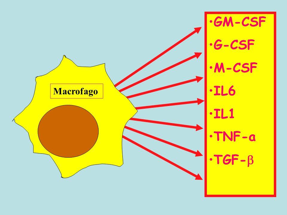 Macrofago GM-CSF G-CSF M-CSF IL6 IL1 TNF-a TGF-
