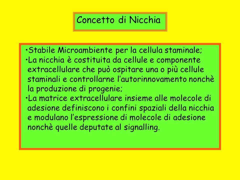 Concetto di Nicchia Stabile Microambiente per la cellula staminale; La nicchia è costituita da cellule e componente extracellulare che può ospitare un