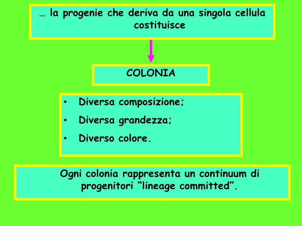 COLONIA … la progenie che deriva da una singola cellula costituisce Diversa composizione; Diversa grandezza; Diverso colore. Ogni colonia rappresenta