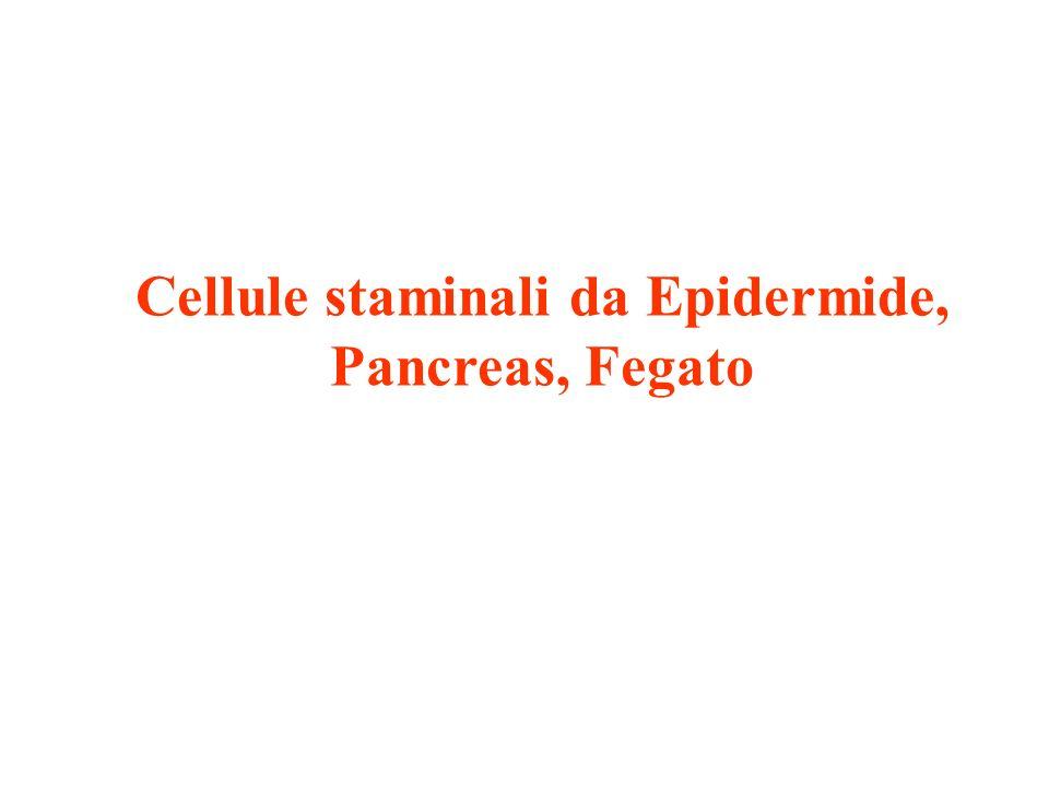 Stem cells pancreatiche -I progenitori pancreatici svolgono un ruolo maggiore durante lo sviluppo embrionale -Non ci sono evidenze che dimostrano in maniera definitiva la presenza di progenitori pancreatici o di stem cells nellorganismo adulto: sembra che il meccanismo di regolazione delle cellule beta sia dovuto ad un self- duplication piuttosto che ad un differenziamento delle stem cells -Sembra plausibile che i progenitori intervengano in determinati momenti di stress contribuendo al mantenimento dellequilibrio tissutale: facultative progenitors