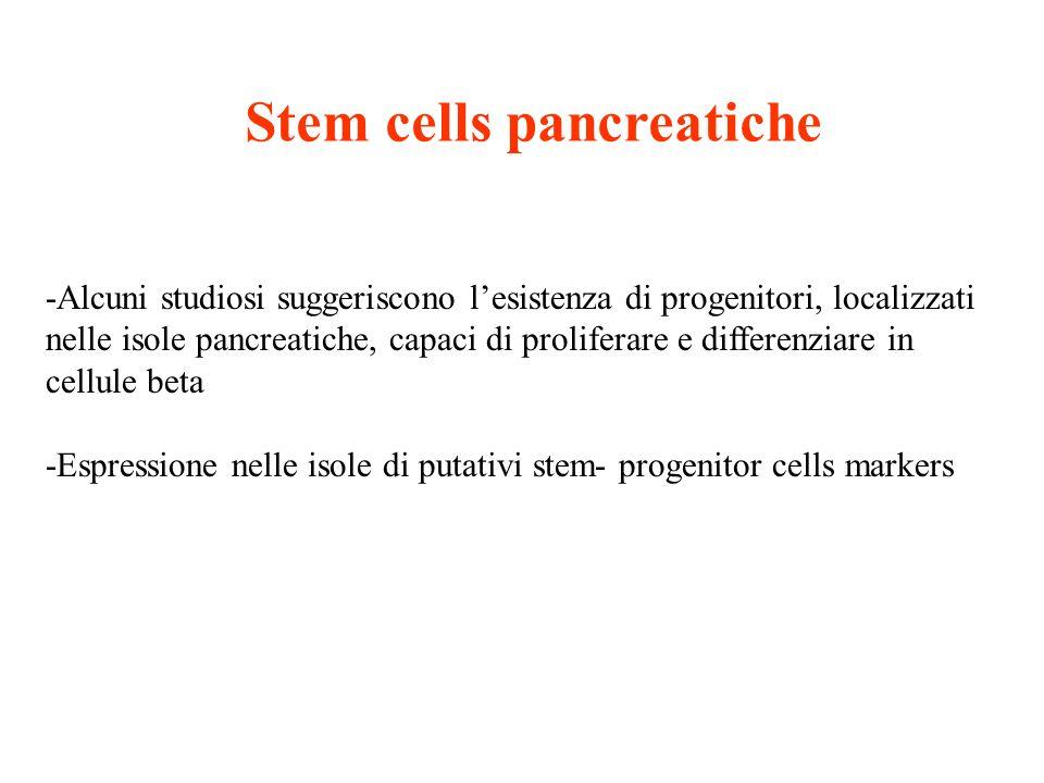 Stem cells pancreatiche -Alcuni studiosi suggeriscono lesistenza di progenitori, localizzati nelle isole pancreatiche, capaci di proliferare e differe