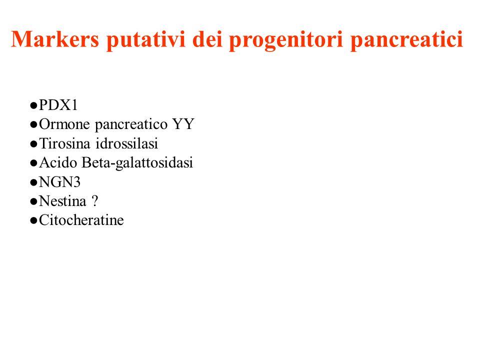 Markers putativi dei progenitori pancreatici PDX1 Ormone pancreatico YY Tirosina idrossilasi Acido Beta-galattosidasi NGN3 Nestina ? Citocheratine