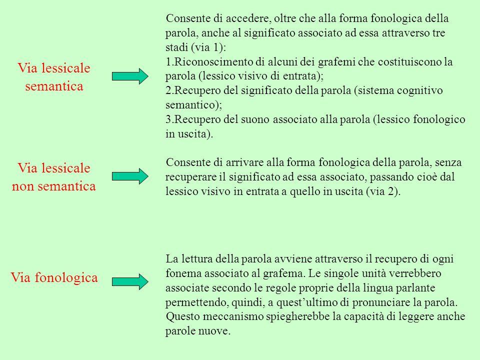 Via lessicale semantica Consente di accedere, oltre che alla forma fonologica della parola, anche al significato associato ad essa attraverso tre stad