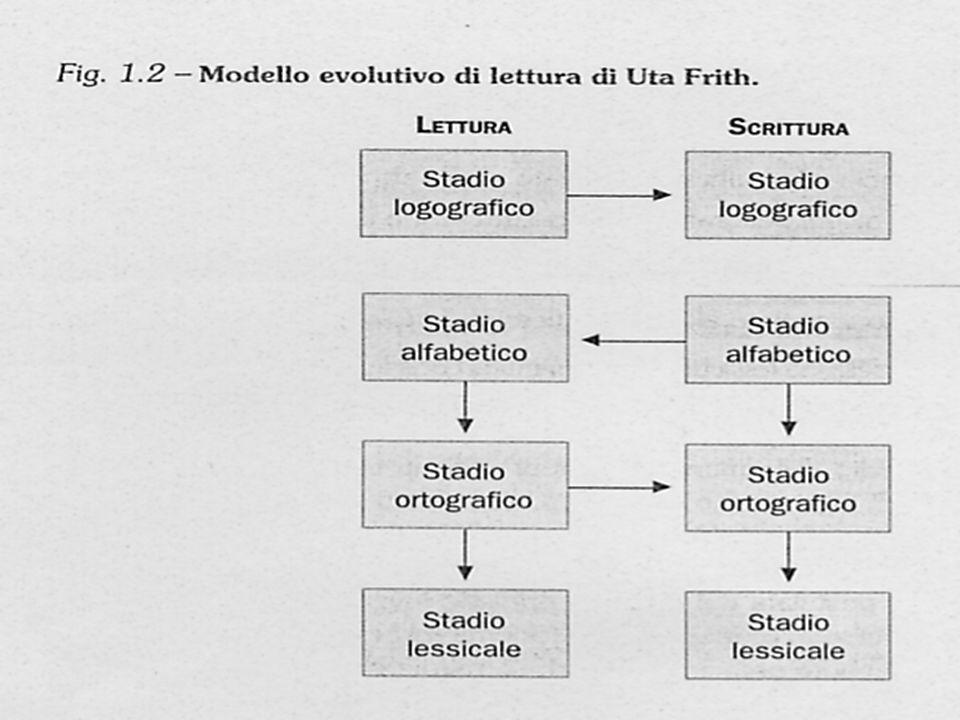 Il modello di Frith, essendo un modello a stadi, ipotizza un andamento gerarchico dell apprendimento della lettura, vale a dire che se il bambino non ha raggiunto le acquisizioni dello stadio logografico non sarà in grado di acquisire competenze dello stadio successivo.