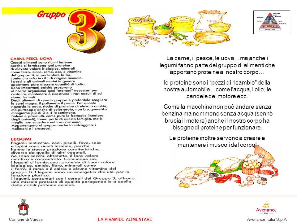 Comune di VareseLA PIRAMIDE ALIMENTARE Avenance Italia S.p.A La carne, il pesce, le uova…ma anche i legumi fanno parte del gruppo di alimenti che appo